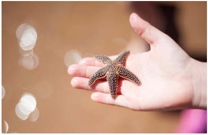 Starfish in the hand of a child