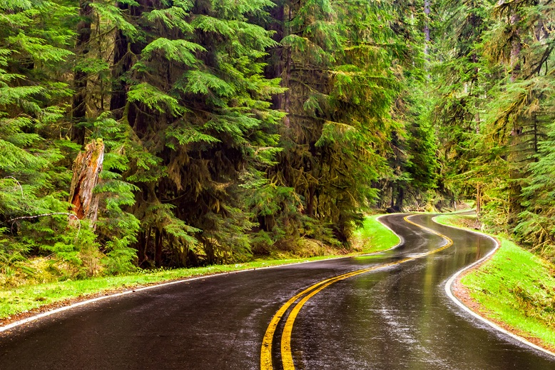 winding-wet-road-through-forest-in-page